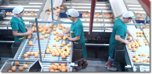 El uso y la calidad del Aire Comprimido en la Industría Agro Alimentaria